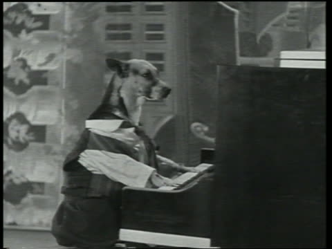 b/w 1930 dog in suit playing upright piano / dogway melody - anno 1930 video stock e b–roll