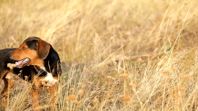 dog in the grass - dog tail stock videos and b-roll footage