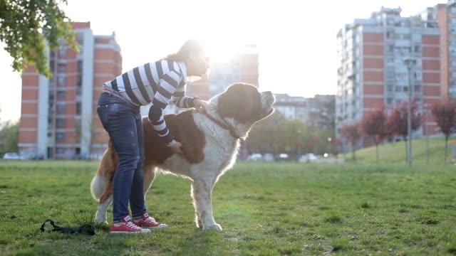vídeos de stock e filmes b-roll de dog is barking on another dog - trela de animal de estimação