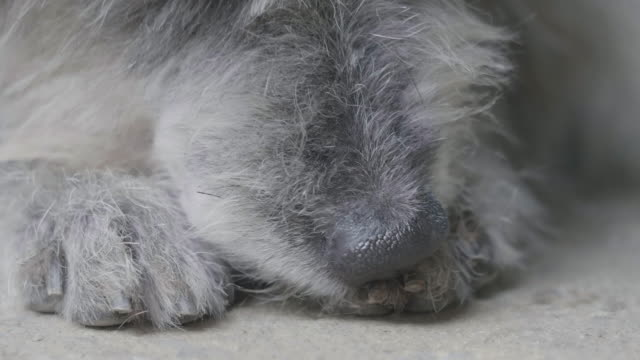 Dog is cleaning its feet,Close-up