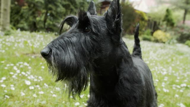 dog is enjoying spring in the back yard - shaking stock videos & royalty-free footage