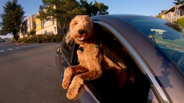 dog is my co-pilot-slow motion car window - carefree stock videos & royalty-free footage