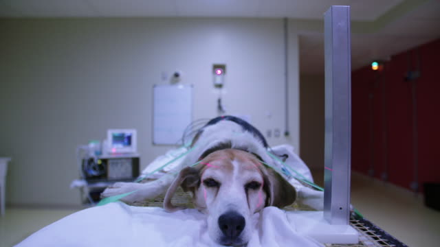 Dog is raised on table for radiotherapy