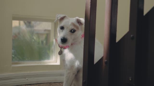 vidéos et rushes de chien est debout sur la fenêtre en attente pour le propriétaire - salle attente