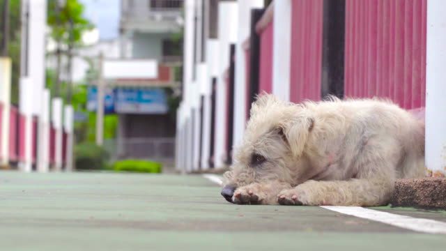 a dog is wet and sad - havanese stock videos & royalty-free footage