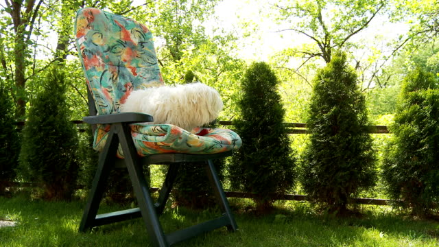 hd: dog jumping on a chair - outdoor chair stock videos & royalty-free footage