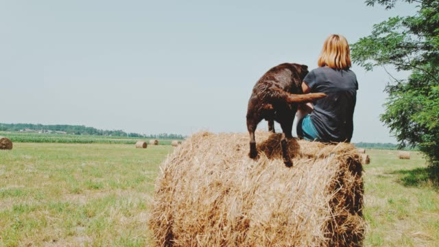 ms dog jumping onto hay bale next to woman on sunny field - photo shooting stock videos and b-roll footage