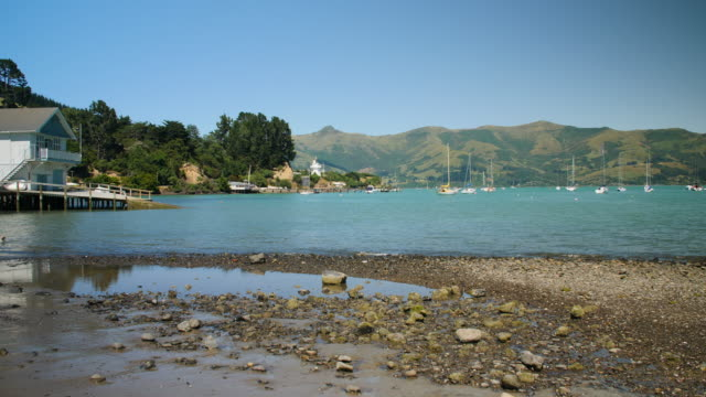 a dog jumps into the sea to chase a ball in akaroa harbour - akaroa stock videos & royalty-free footage