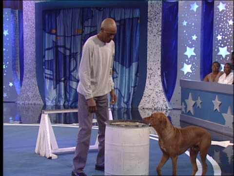 a dog jumps onto a barrel and then turns around on top of it. - performing tricks stock videos & royalty-free footage