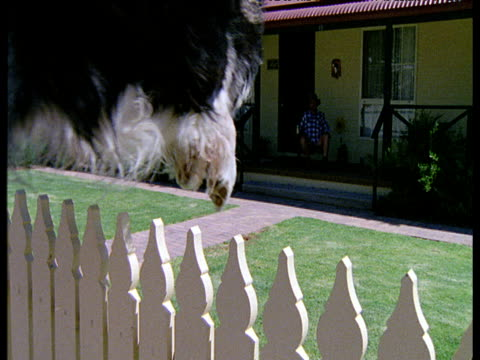 dog leaping over white picket fence into garden - picket fence stock videos and b-roll footage