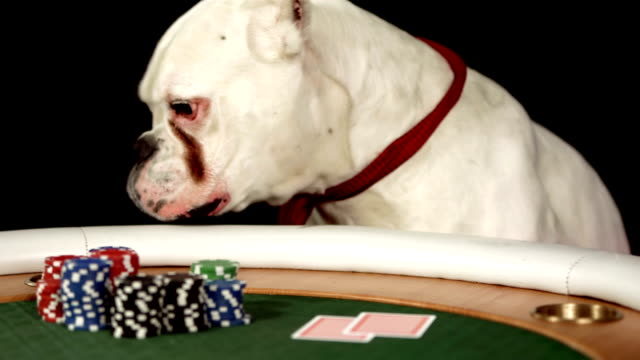 hd dolly: dog leaving a poker table - boxer dog stock videos and b-roll footage