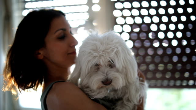 dog licking girl - maltese dog stock videos and b-roll footage
