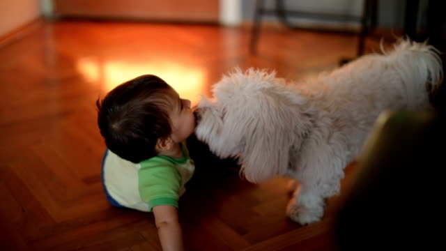 Dog licking little boy
