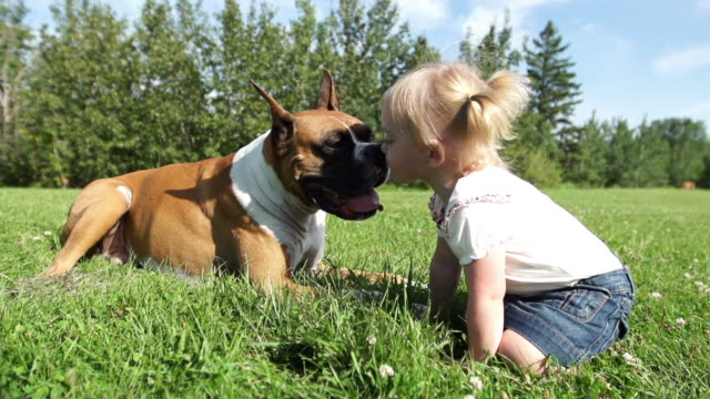 dog licks his master - babies only stock videos & royalty-free footage