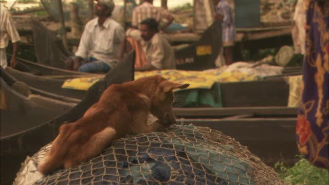 vídeos de stock e filmes b-roll de dog licks paws while sat on shore side fishing nets available in hd. - rede de pesca comercial