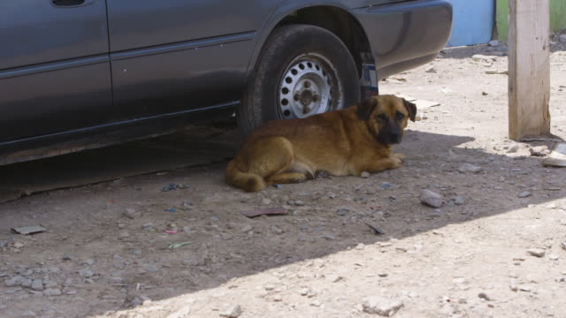 dog lies in shade of parked car, wide shot - stray animal stock videos & royalty-free footage