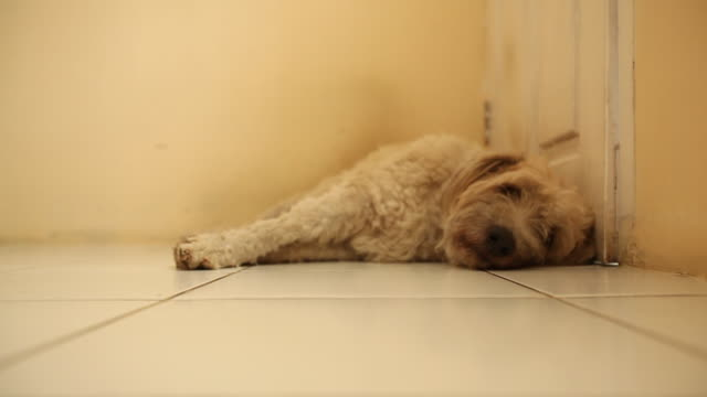 Dog lies on tiled floor in front of door, looks up briefly.