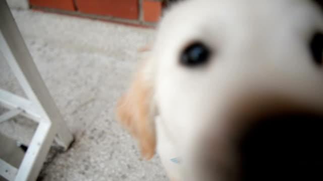 Hund, Blick in die Kamera.
