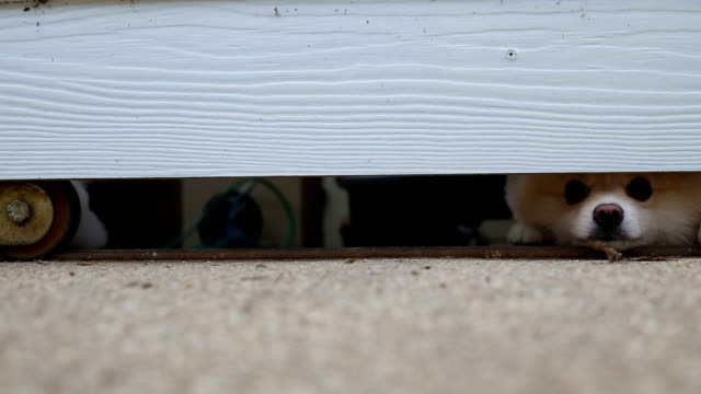 Chien à la recherche de la porte d'entrée