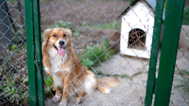 dog looks through a cage at an animal shelter - fence stock videos & royalty-free footage