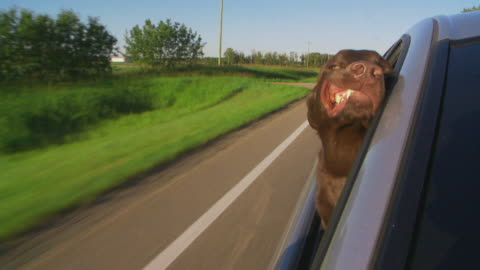 dog loves the wind - car stock videos & royalty-free footage