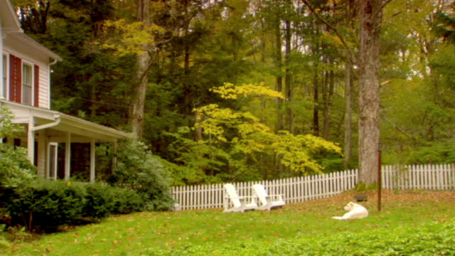 ws, dog lying in garden of country house, autumn, phoenicia, new york, usa - picket fence stock videos and b-roll footage