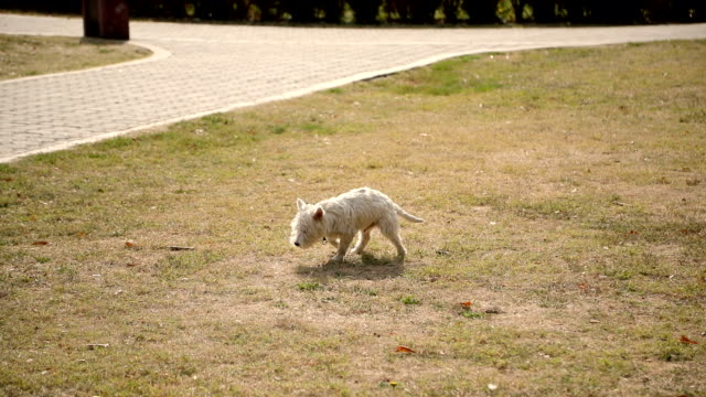 dog making a poop on grass - off leash dog park stock videos & royalty-free footage