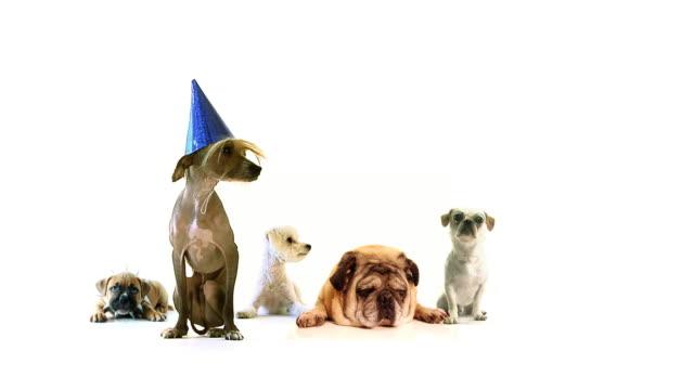 Dog Mega Party