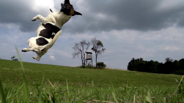 hd super slow-motion: cane perso la palla - fallimento video stock e b–roll