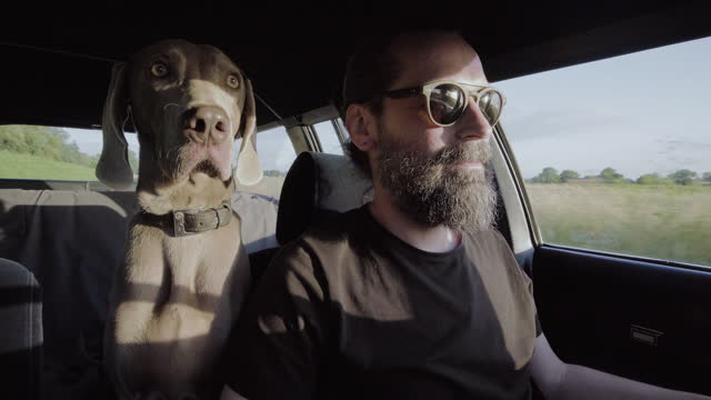 dog on a trip. sitting in a car with owner - riding stock videos & royalty-free footage