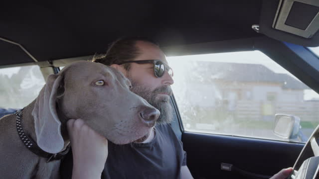 dog on a trip. sitting in a car with owner - pet owner stock videos & royalty-free footage