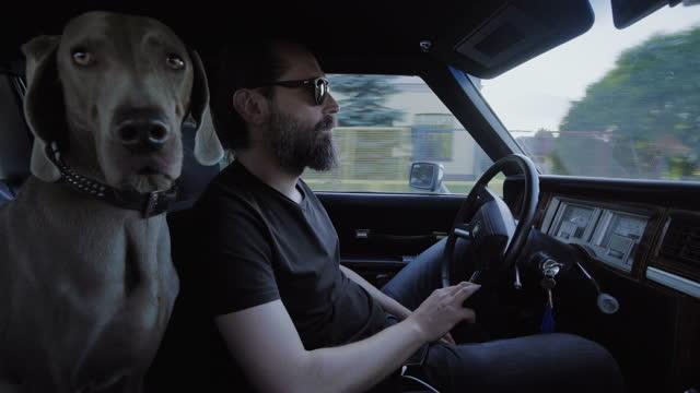 vídeos de stock e filmes b-roll de dog on a trip. sitting in a car with owner - dono de animal doméstico