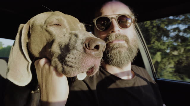 dog on a trip. sitting in a car with owner - dog stock videos & royalty-free footage