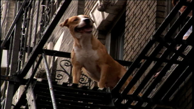 dog on fire escape in nyc - fire escape stock videos and b-roll footage