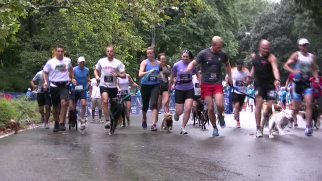 stockvideo's en b-roll-footage met dog on leash run a five mile race in central park with their owners - salmini