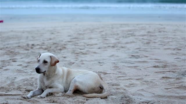 Hund am Strand.
