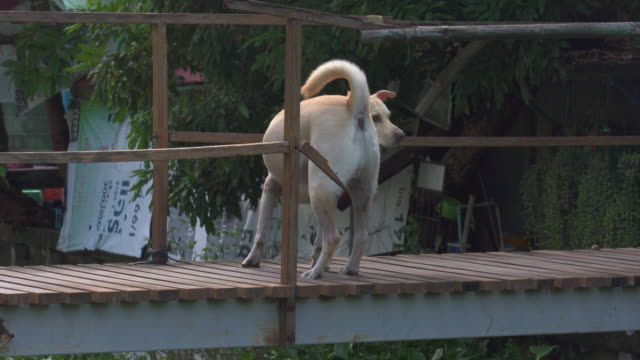 dog on the bridge - rescue stock videos & royalty-free footage
