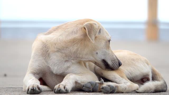 4k: hund auf der straße - tierische nase stock-videos und b-roll-filmmaterial