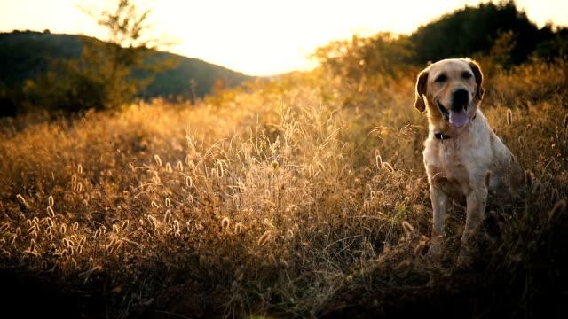 Hund auf der Reise in die Berge