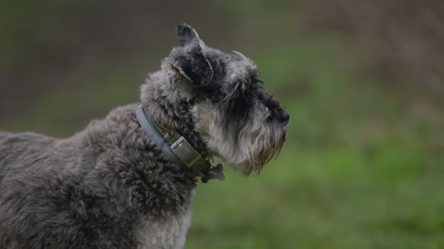 dog on walk in countryside - collar stock videos and b-roll footage