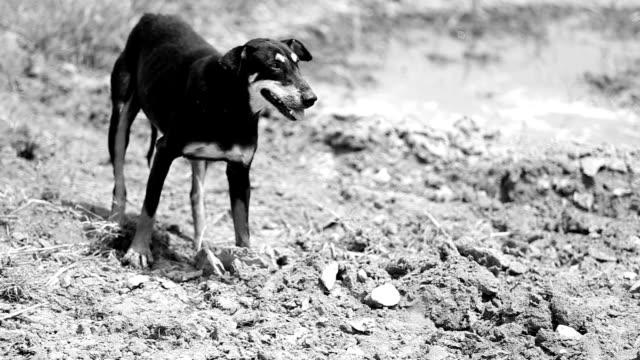 vídeos y material grabado en eventos de stock de perro al aire libre - monocromo imagen virada