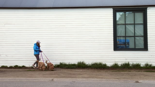 dog owner on main street - elk avenue - haustierleine stock-videos und b-roll-filmmaterial