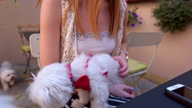 vídeos de stock, filmes e b-roll de proprietário do cão que senta-se em um café com seus amigos - mamilo