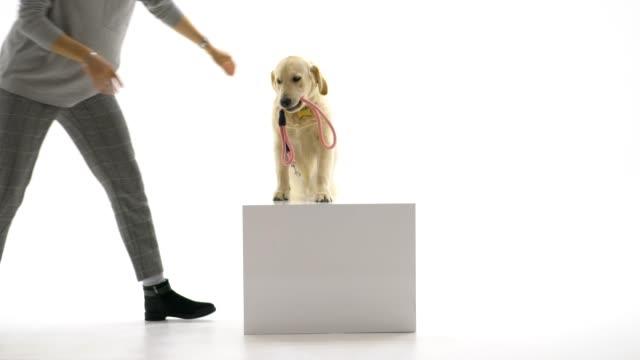 vídeos de stock e filmes b-roll de dog owner teaching her dog - trela de animal de estimação