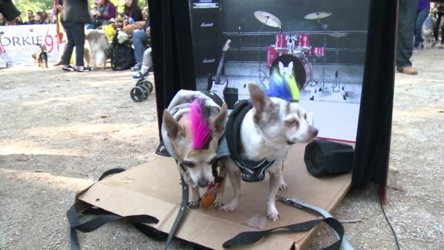 vídeos de stock, filmes e b-roll de dog owners dress up their spooky pooches in costumes for the annual halloween dog parade - desfiles e procissões