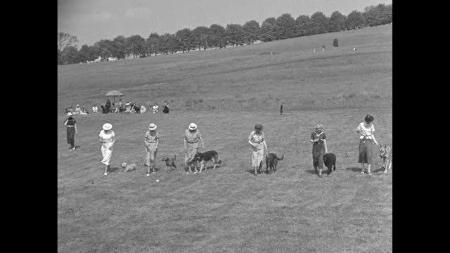 dog owners standing in field with their dogs sitting next to them dog obedience school founder helene walker standing next to them gives them... - back to front stock videos & royalty-free footage