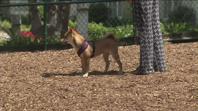 ktla dog park in los angeles - off leash dog park stock videos & royalty-free footage