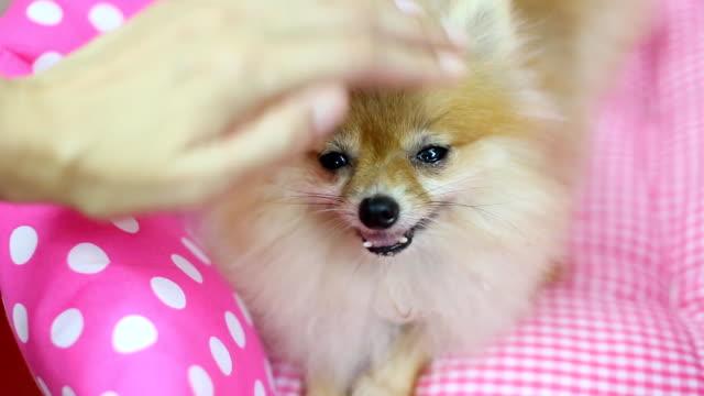 dog patting