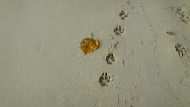 dog pawprints on beach in tahiti, point of view - paw print stock videos & royalty-free footage