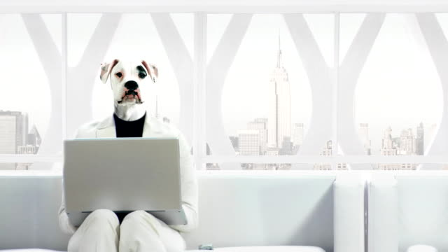 dog people business texting - surrealism stock videos & royalty-free footage